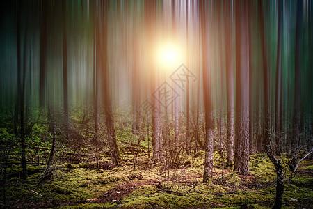密林深处图片