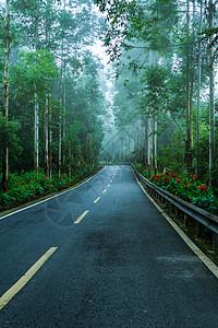 林间 公路图片