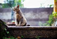 鼓浪屿老宅里的猫图片