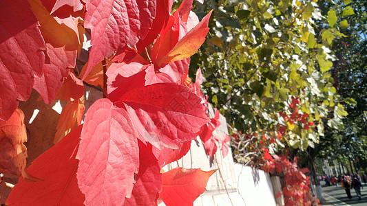 红叶风景图片