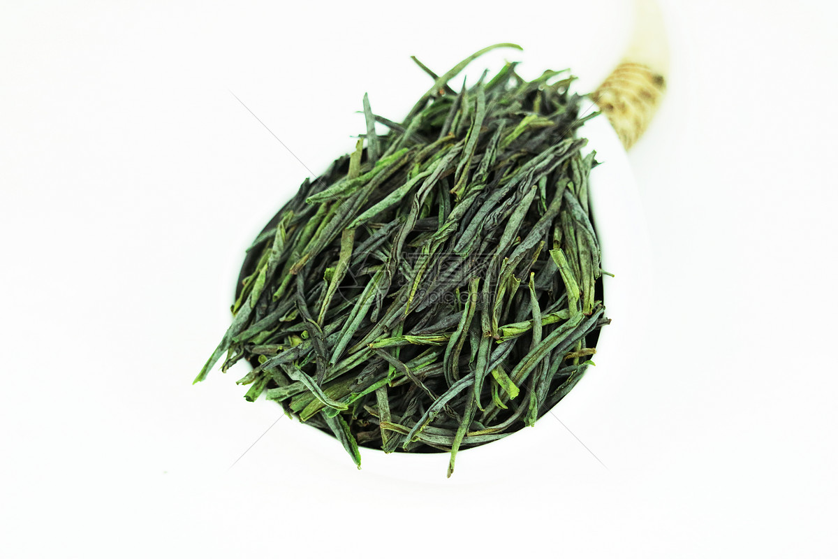 安吉白茶种植要求