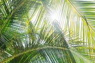 阳光椰树图片