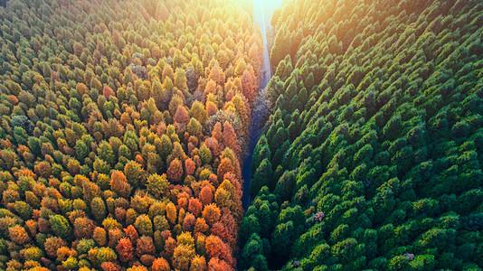重庆山王坪森林航拍图片