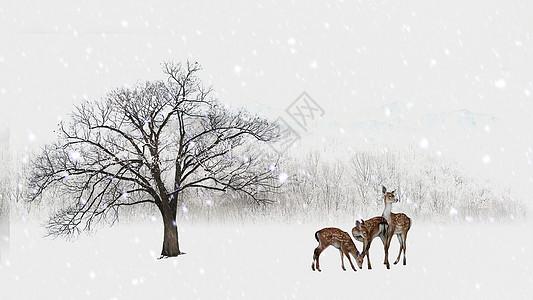 风雪中的动物图片