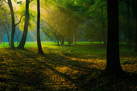 初冬树林的耶稣光图片