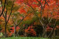 深秋的红树林图片