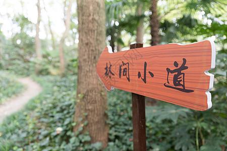 林间小道公园指示牌图片
