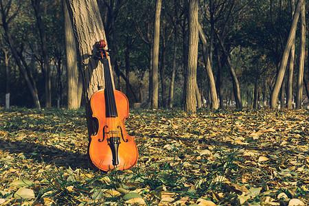 树林中的小提琴图片