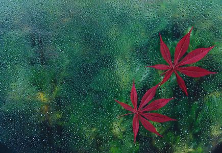 秋天露水中的红叶图片