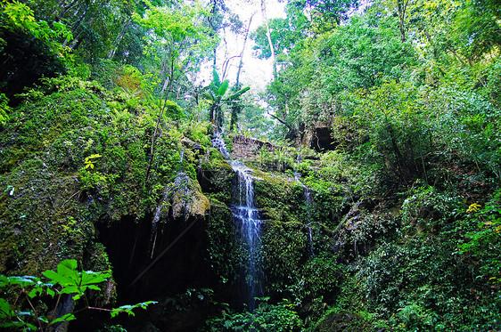 西双版纳原始森林公园图片