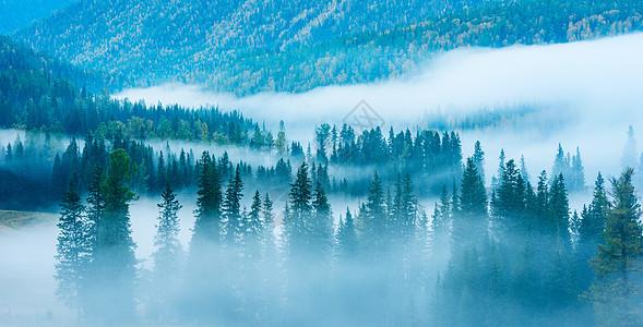 云雾罩山林图片