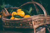 一篮桔子图片