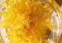 阳光下的金丝皇菊图片