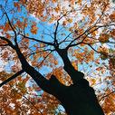黄色的秋天图片