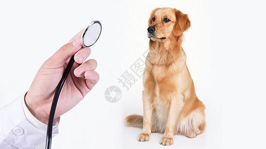宠物医院图片