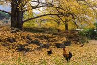 秋之颂图片
