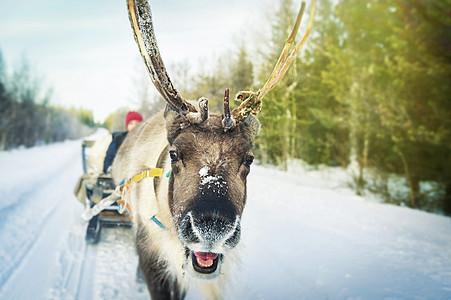 芬兰罗瓦涅米圣诞老人村驯鹿雪橇图片