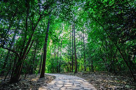 秋季的林间小道图片