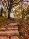 秋天的树林图片