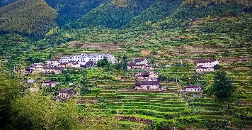 绿色梯田和农舍村庄图片