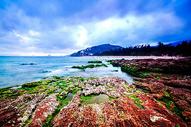 盐洲红海岸图片