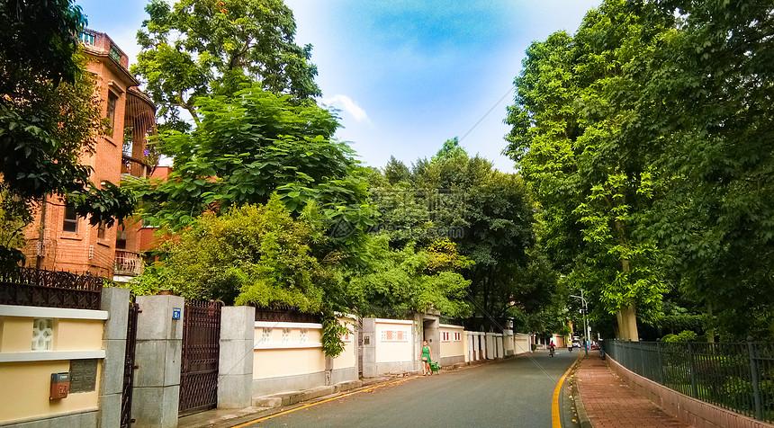 绿色树木中的空旷街道城市风景街景图片