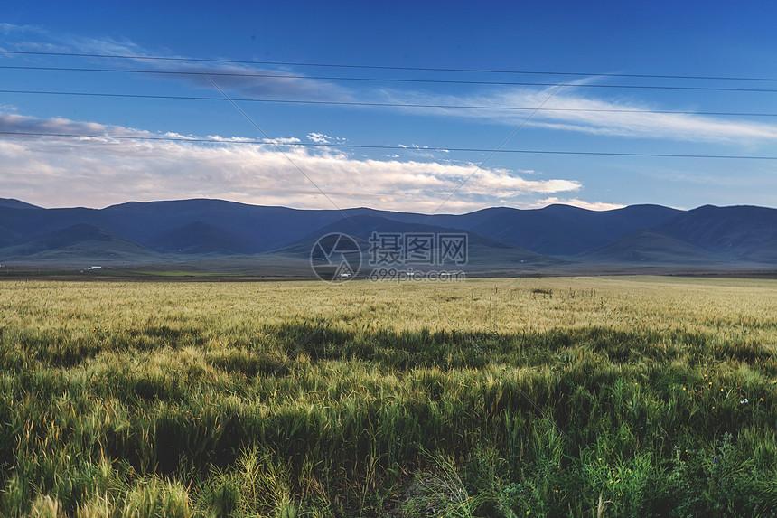 秋季的麦田图片