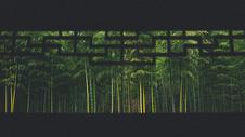 中国大竹海图片