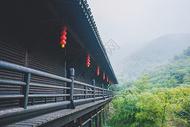 大唐贡茶院竹林图片