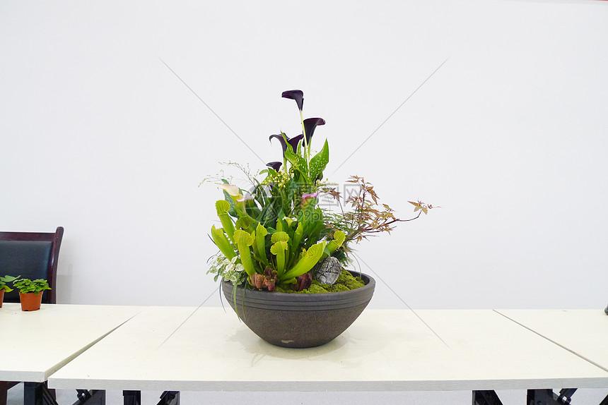 组合盆栽图片