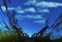 天津桥园的早晨图片