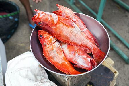 刚捕捞的红石斑鱼图片