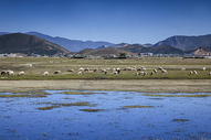 草原牛羊成群图片