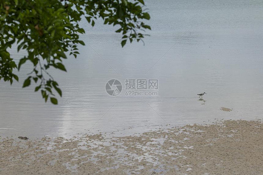 海边小鸟在觅食图片