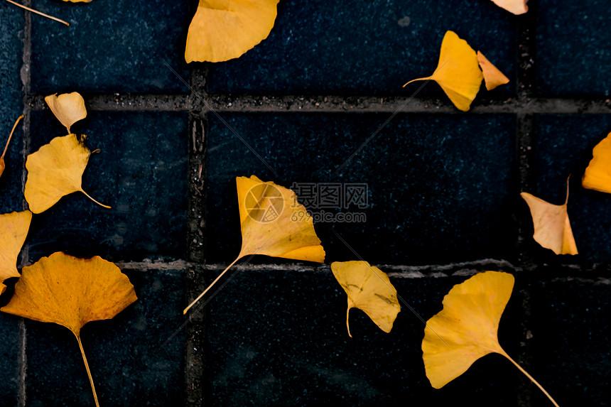 银杏叶子手绘风格极简写真摄影绘画插画图片