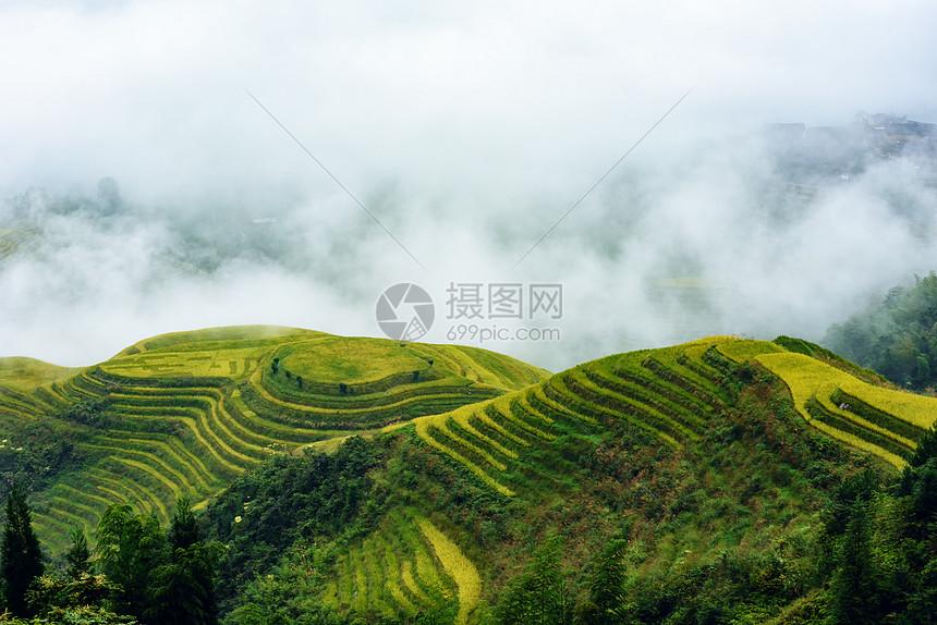 云雾中的梯田风光图片