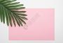 色彩拼接背景上的植物图片