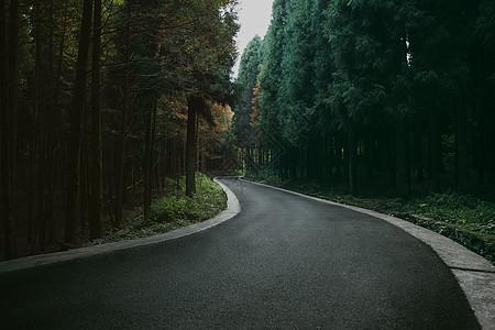 神秘森林里的路图片