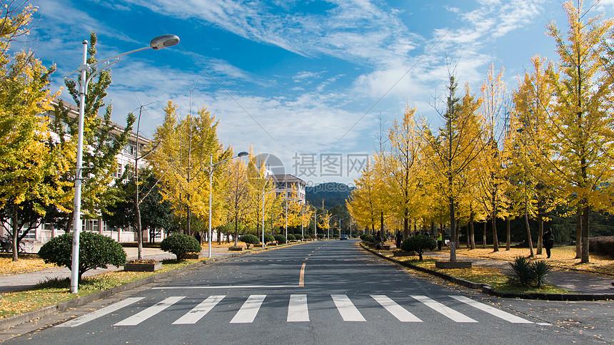 秋天的银杏大道图片