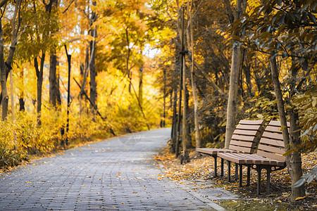秋天的躺椅图片