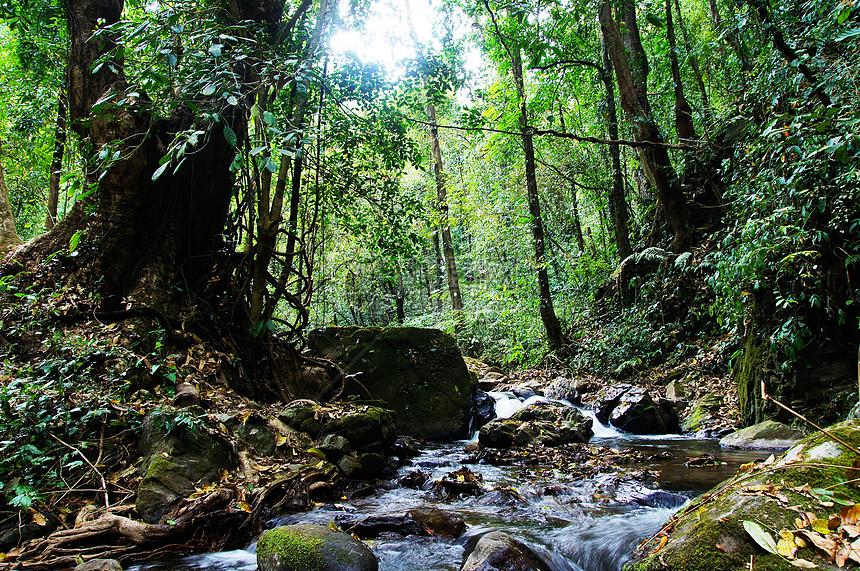 腾冲黑鱼河雨林景观图片
