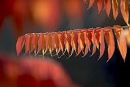 秋色红叶黄叶图片