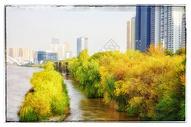 兰州黄河边的秋色图片
