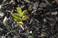 公园里的树叶图片