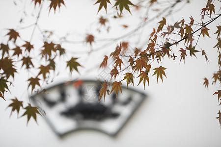 中国风的红枫树叶图片