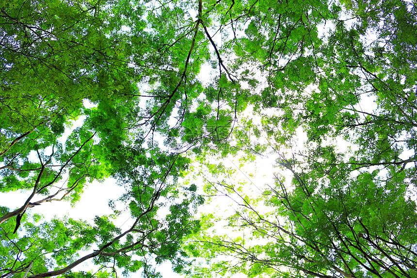 绿荫电子琴简谱