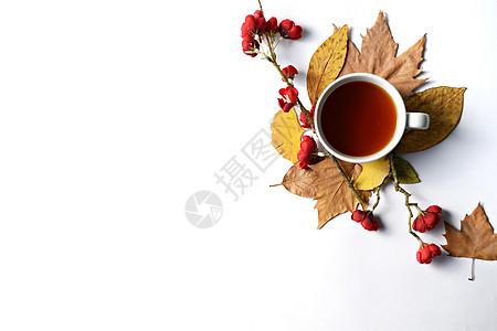 咖啡树叶图片