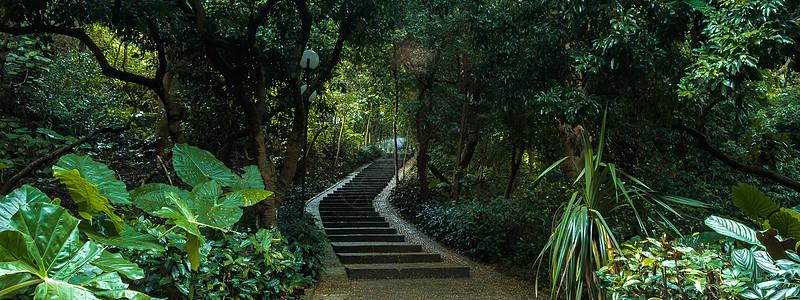 森林小路背景图片