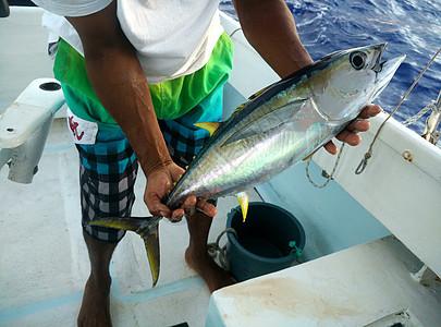 出海钓到的金枪鱼图片