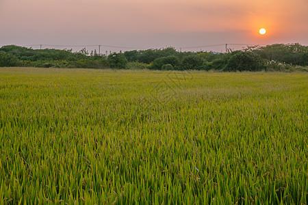 秋日黄昏下的农田图片